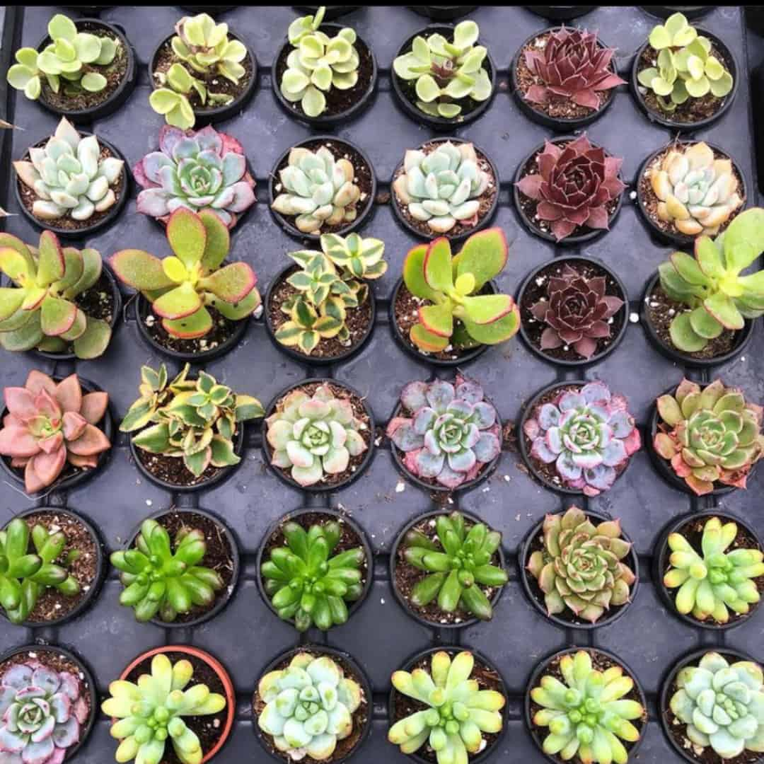 6 Must-Try Local Plant Stores Around Toronto and the GTA